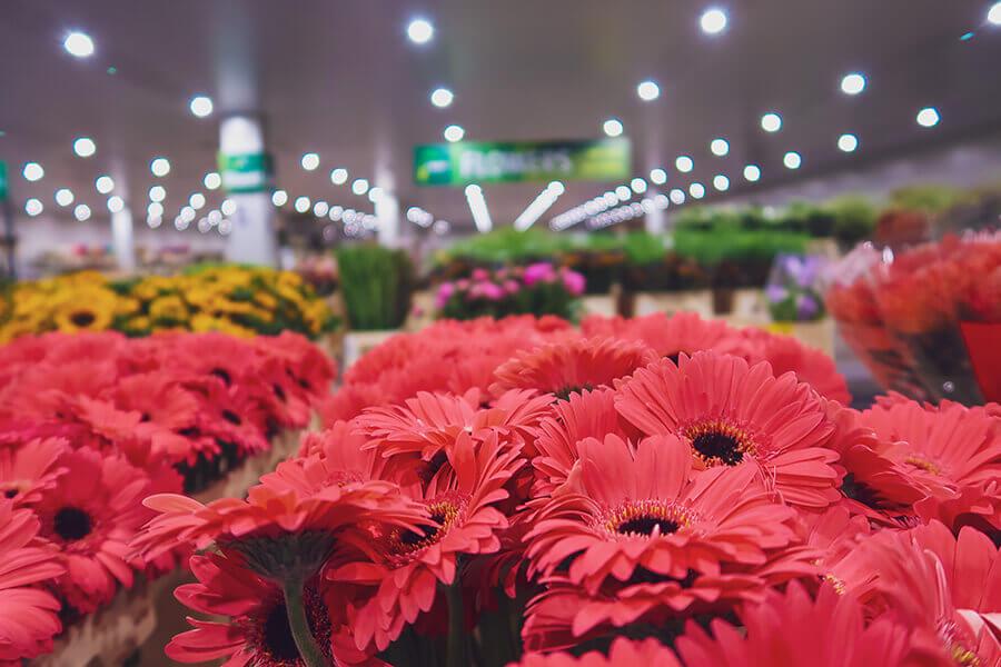 Groothandel Bloemen - verse bloemen - filiaal Agora - Cash & Carry - Gerbera