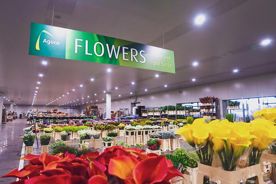 Groothandel Bloemen - verse bloemen - filiaal Agora - Cash & Carry