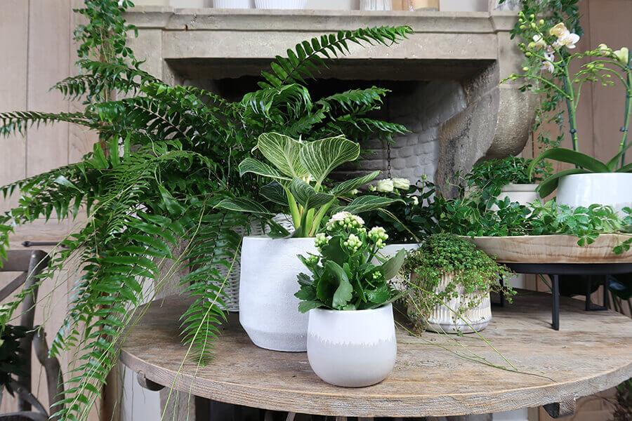 Gemengde planten lifestyle