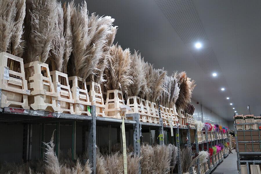 Groothandel Bloemen - droogbloemen aardekleuren rustiek - filiaal Agora - Cash & Carry