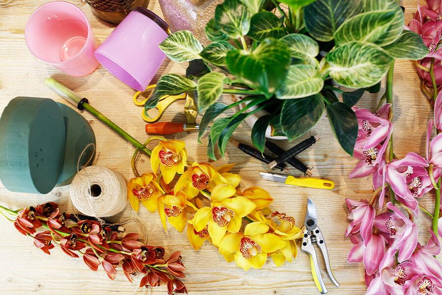 groothandel professioneel gereedschap - orchidee