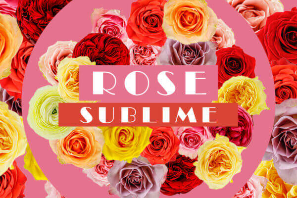 ROSE SUBLIME
