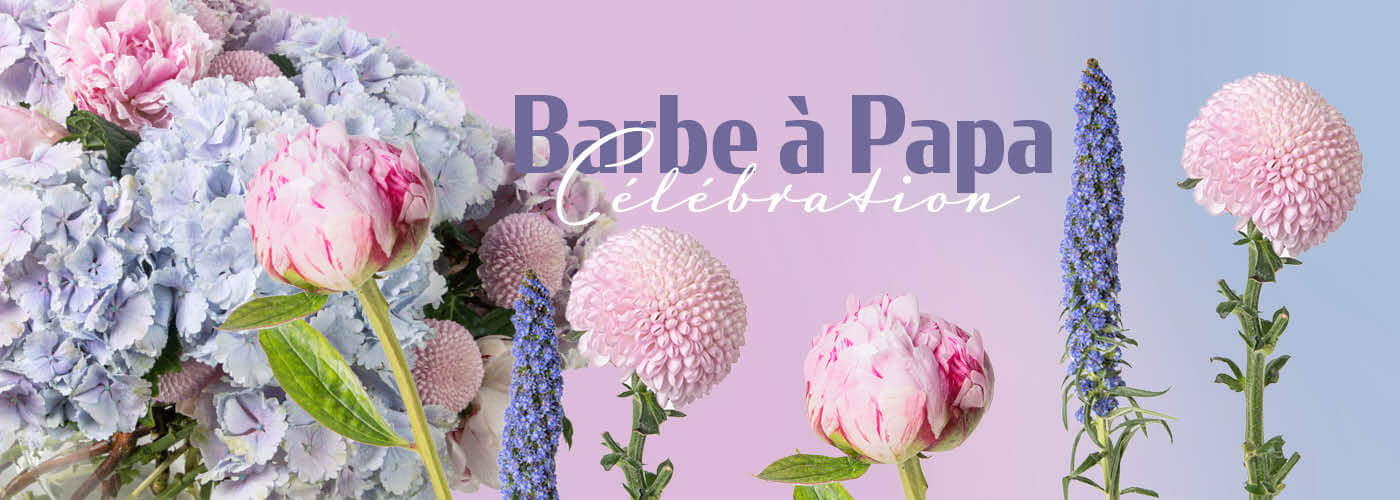 BARBE A PAPA CELEBRATION
