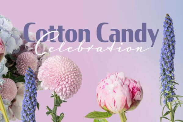 COTTON CANDY CELEBRATION