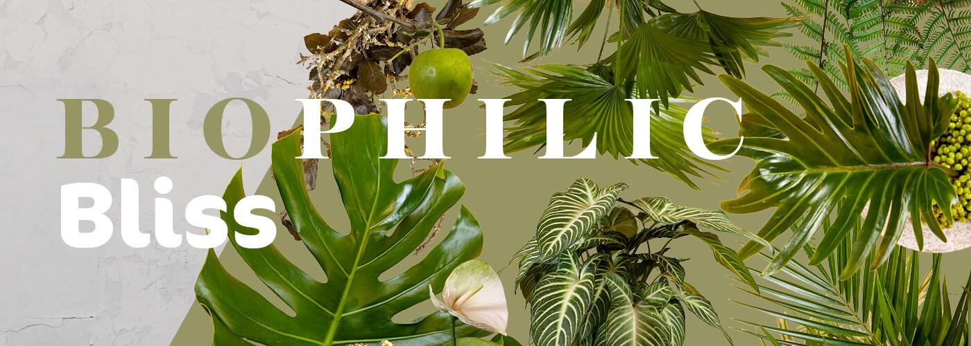 BIOPHILIC // BLISS