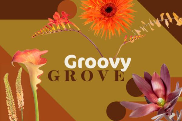 GROOVY GROVE